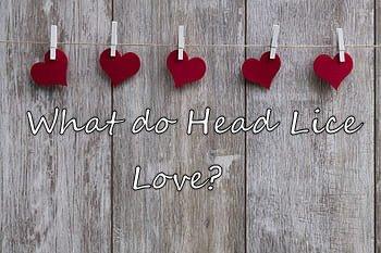 LCA Greenville what head lice love